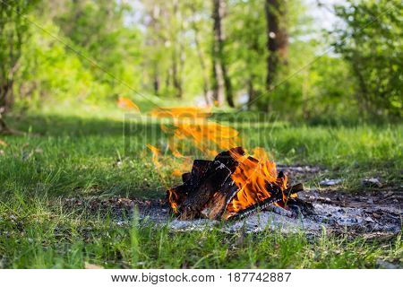 campfire on green meadow in summer forest