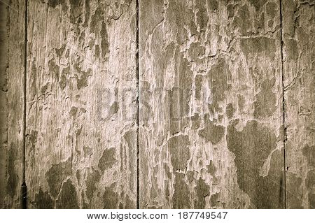 Texture old dirty wood background design grunge style