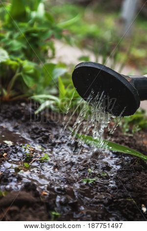 Water The Soil From The Watering Can. Close-up, Concept Gardening, Yard Work