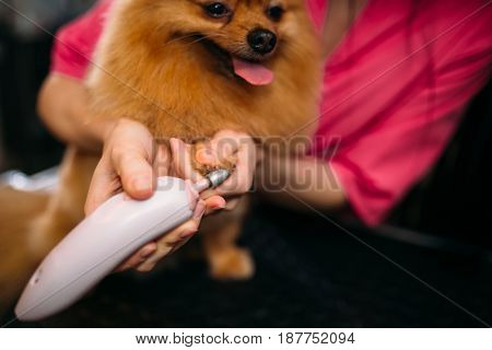 Pet groomer cleans claws of a dog