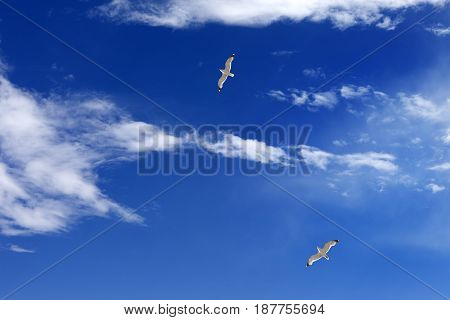 Two Seagulls Hover In Blue Sky With Sunlight Clouds