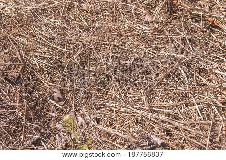 Big field of straw dry straw straw background texture