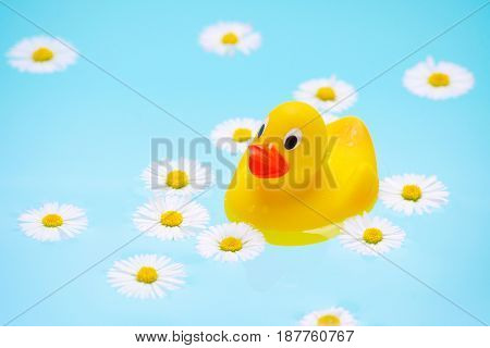 baby bath with chamomile flowers and a duck in blue water