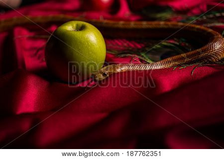 The Snake Released Her Tongue On The Table With Apples