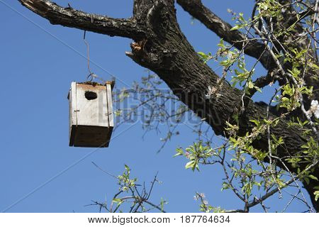 Almond tree bird house. Made to help birds in the wild