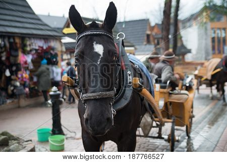 Horses in a harness in a touristic village Zakopane, Poland