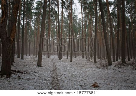 Snow still lies on forest paths and paths in early spring.
