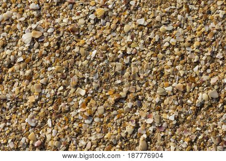The sea shells a nature texture background