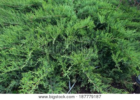 A photograph of an organic material of plant origin from a short distance.