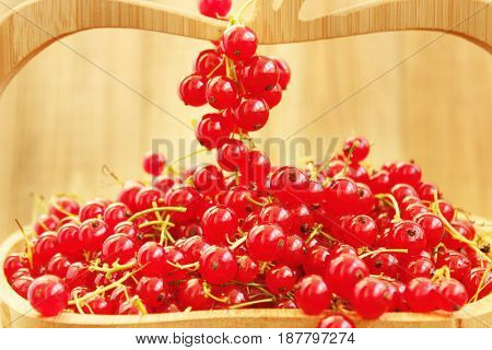 clusters of fresh ripe berries of red currant on the wooden vase