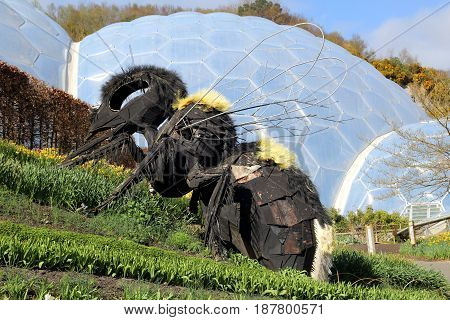 Bodelva, Cornwall, Uk - April 4 2017: Giant Bee Sculpture And Biomes At The Eden Project Environment