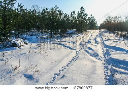 Winter In The Ukrainian Steppe