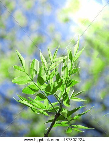 fresh spring branch on sky background in sunlight.