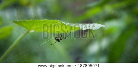 Insect perched on a leaf in a Venezuelan mountain