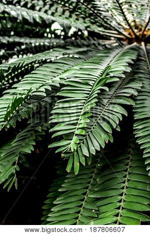 exotic green plant leaves closeup in greenhouse space