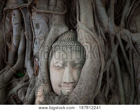 Buddha head in tree root Wat Phra Mahathat temple in Phra Nakhon Si Ayutthaya Historical Park Thailand.