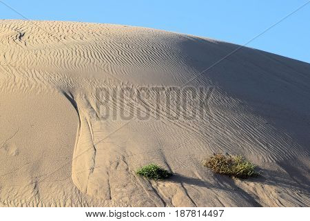 Sand dunes with shadows during the late afternoon sunlight