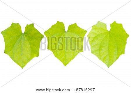 Green leaf isolated on the white background.