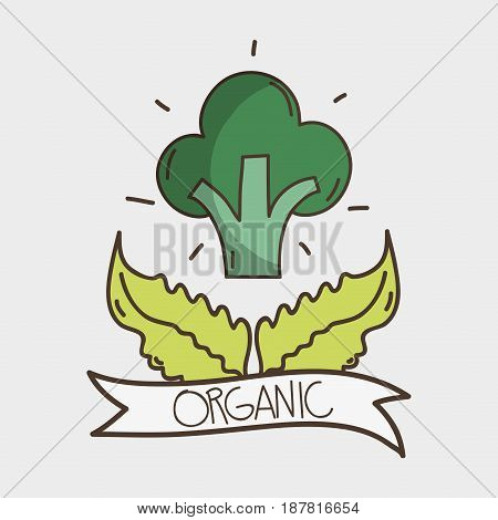 tasty fresh broccoli with leaves design, vector illustration