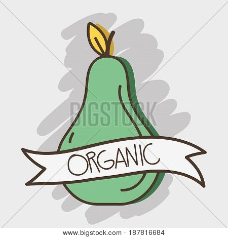 fresh avocado organ fruit with ribbon, vector illustration