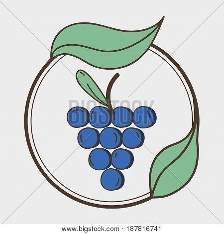 fresh grape organ fruits with leaves, vector illustration