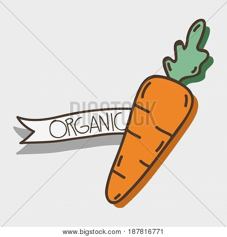 fresh carrot organ vegetable with ribbon, vector illustration