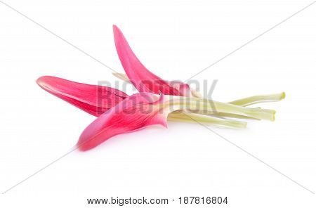 petal of fresh red sesban or humming bird tree on white background