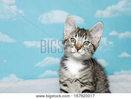 Portrait of one cute and curious gray and white tabby kitten looking at viewer. Sitting on a white blanket blue background sky with clouds