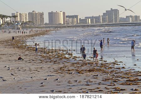 Clearwater, Florida, USA - January 24, 2017: Late afternoon at Clearwater Beach as people wander and wade in the warm Gulf of Mexico waters among colorful buildings seabirds and washed up seaweed that line the shore