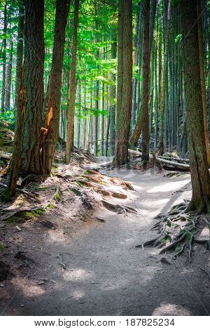 Path through forest lined with exposed roots in Glacier National Park Montana