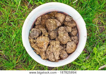 Horse manure in a white bucket 1