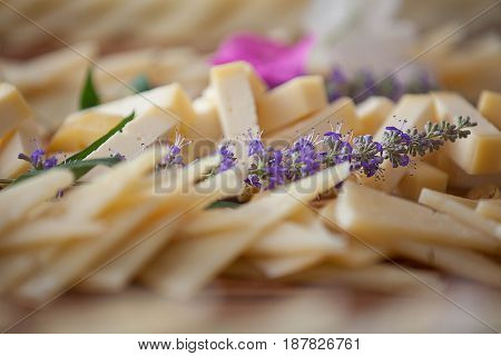 cheese soft focus background