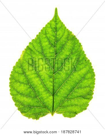 Close up green leaf texture as green nature abstract background