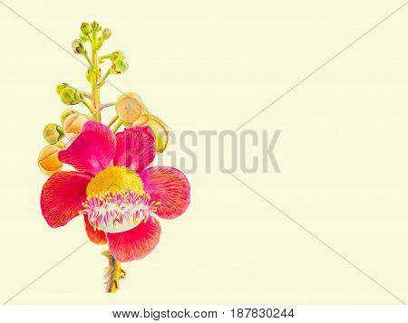 Painting watercolor colorful of Sal flower bouquet in white background textures paper congratulation postcard