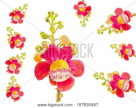 Painting flower pattern watercolor colorful of sal flowers in white background postcard congratulation on special occasions