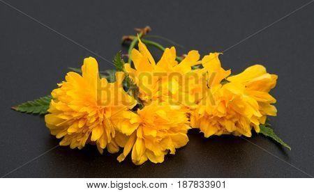 Beautiful daisy flowers isolated on black background cutout