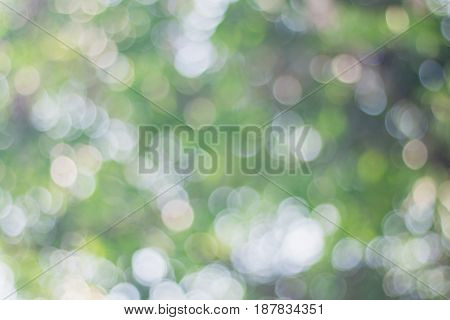 Blurred image of soft green bokeh background.