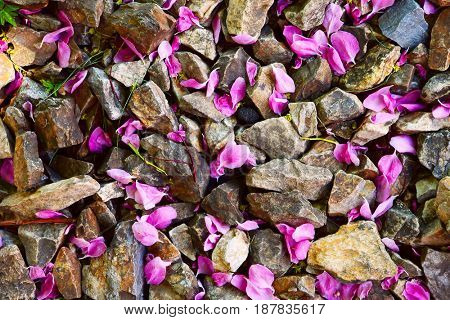Pink flower petals from a tree strewn among rocks