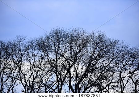 Bare Tree Forest On Blue Sky Natural Background