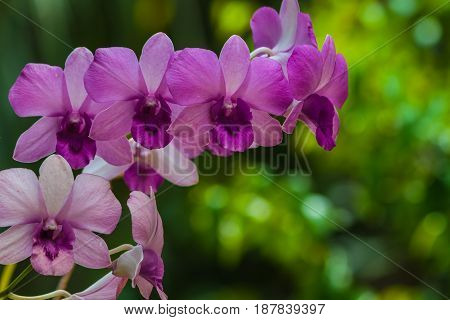 Beautiful orchid bouquet of flowers to bloom beautifully.