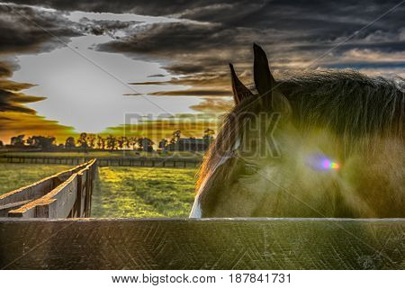 Horse head behind a fence rail with pasture in background with sun flare and HDR filter