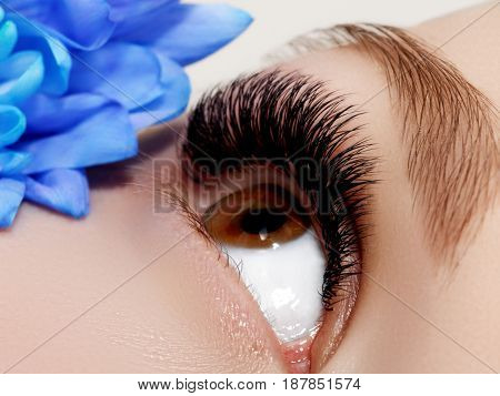 Beautiful Macro Shot Of Female Eye With Classic Clean Makeup. Perfect Shape Of Eyebrows And Long Eye