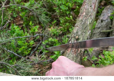 Cutting firewood with a hand saw in the forest. Preparation of firewood for the cooking over open camp fire.