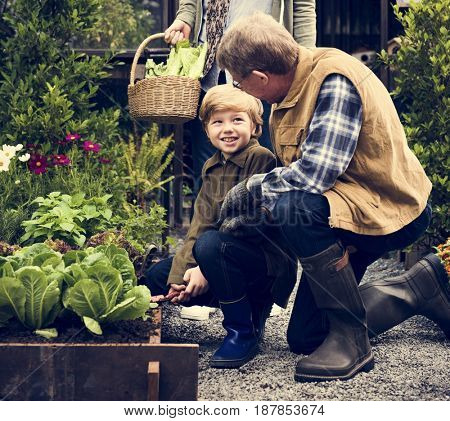 Grandparents and Grandson Pick Up Fresh Vegetable Together