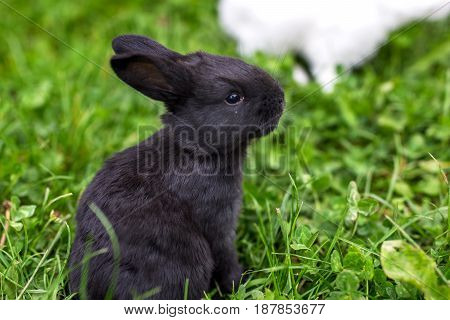 Funny Baby  Rabbit On Grass