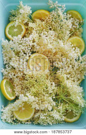 Elderflowers and lemon slices. The sweetly scented, creamy-white flowers of the elder tree with lemon (ingredients for making elderflower cordial).