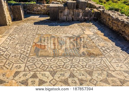 View at the mosaic in Aphrodite House in ruins of ancient city Volubilis in Morocco