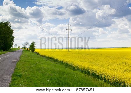 Road through yellow rapeseed field under blue cloudy sky. The powerlines on the  field