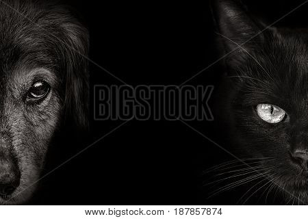 dark muzzle spaniel dog and cat closeup. front view