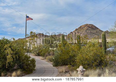 Cactus In The Saguaro National Park